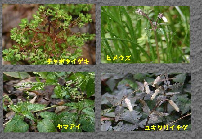 小石川2g.jpg
