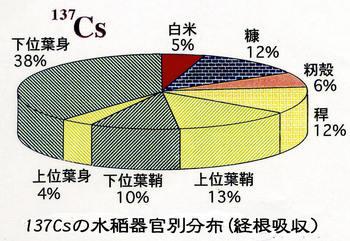 137Csの水稲体内分布.jpg