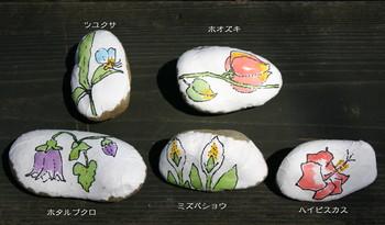 セキ絵手紙.jpg