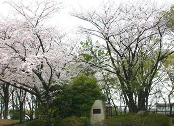 レーガン桜.jpg