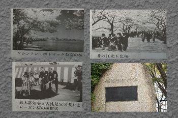 レーガン桜関連写真.jpg