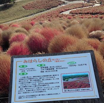 日立海浜農園2.jpg