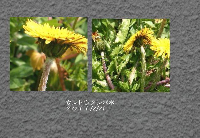カントウ合成2.jpg
