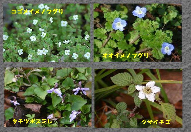 小石川1g.jpg