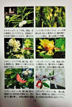 DSC_0045r.jpg