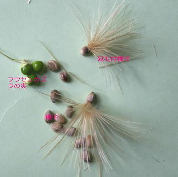 アーティチョークの種子.jpg