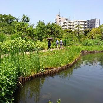 向島百花園.JPG
