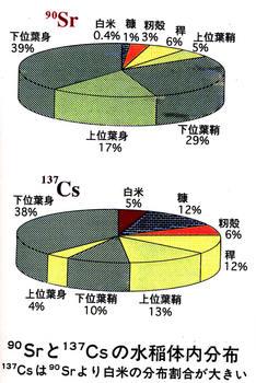 水稲体内の分布.jpg